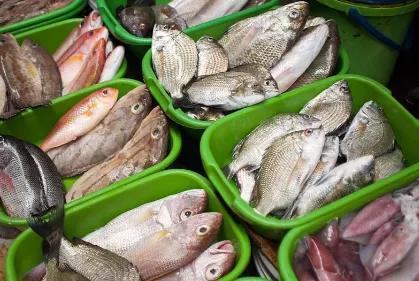 【今日广东•乡音】海鱼的诱惑