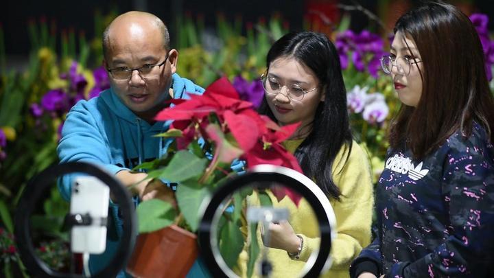 当今年的广州传统迎春花市按了下暂停键,广州市民何处觅春花?